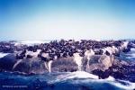 Ilha das Focas